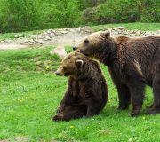 медвежья резервация Зарнешти